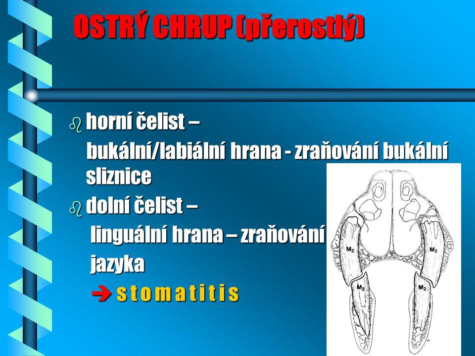 OSTRÝ CHRUP (přerostlý) OSTRÝ CHRUP (přerostlý) b horní čelist – bukální/labiální hrana - zraňování bukální sliznice bukální/labiální hrana - zraňování bukální sliznice b dolní čelist – linguální hrana – zraňování linguální hrana – zraňování jazyka jazyka  s t o m a t i t i s  s t o m a t i t i s
