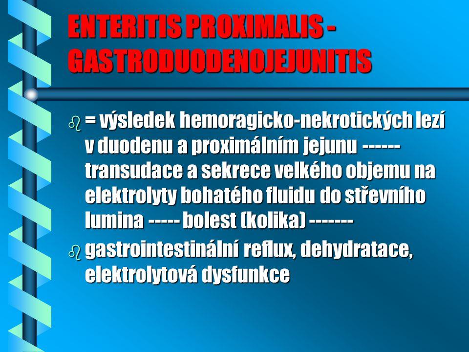 ENTERITIS PROXIMALIS - GASTRODUODENOJEJUNITIS b = výsledek hemoragicko-nekrotických lezí v duodenu a proximálním jejunu ------ transudace a sekrece velkého objemu na elektrolyty bohatého fluidu do střevního lumina ----- bolest (kolika) ------- b gastrointestinální reflux, dehydratace, elektrolytová dysfunkce