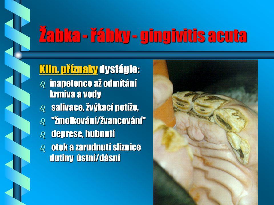 Žabka - řábky - gingivitis acuta Klin. příznaky dysfágie: b inapetence až odmítání krmiva a vody b salivace, žvýkací potíže, b