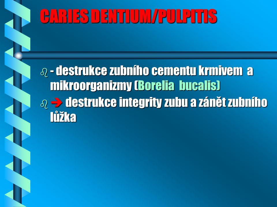 CARIES DENTIUM/PULPITIS b - destrukce zubního cementu krmivem a mikroorganizmy (Borelia bucalis) b  destrukce integrity zubu a zánět zubního lůžka