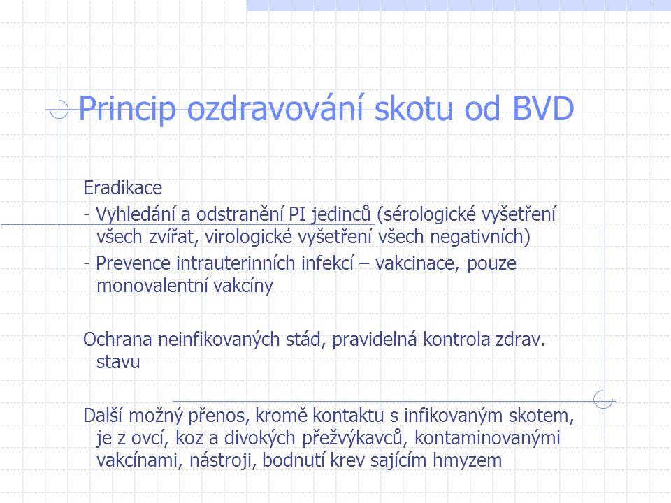 Princip ozdravování skotu od BVD Eradikace - Vyhledání a odstranění PI jedinců (sérologické vyšetření všech zvířat, virologické vyšetření všech negati