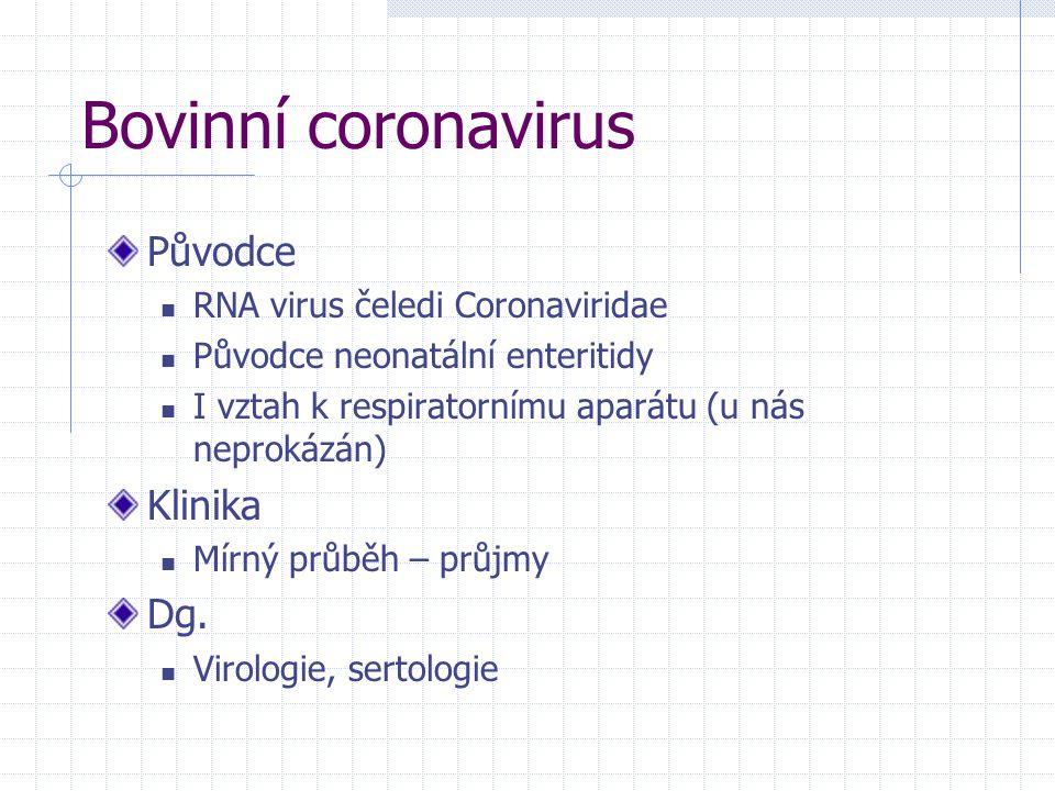 Bovinní coronavirus Původce RNA virus čeledi Coronaviridae Původce neonatální enteritidy I vztah k respiratornímu aparátu (u nás neprokázán) Klinika M