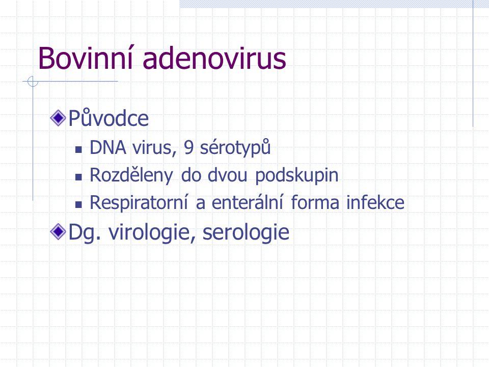 Bovinní adenovirus Původce DNA virus, 9 sérotypů Rozděleny do dvou podskupin Respiratorní a enterální forma infekce Dg. virologie, serologie