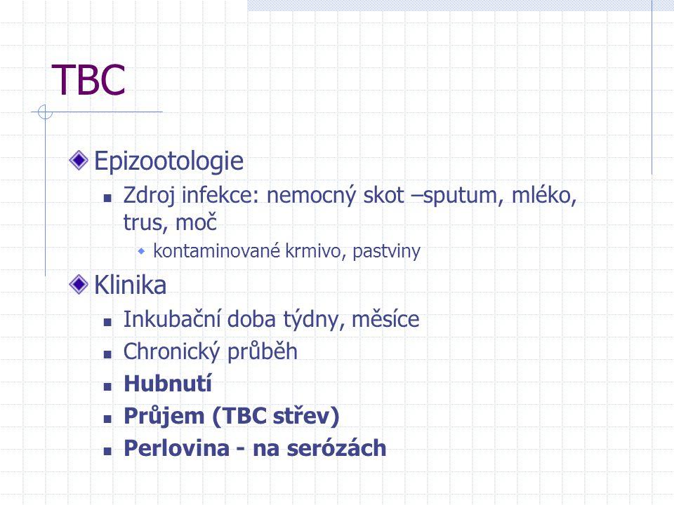 TBC Epizootologie Zdroj infekce: nemocný skot –sputum, mléko, trus, moč  kontaminované krmivo, pastviny Klinika Inkubační doba týdny, měsíce Chronick