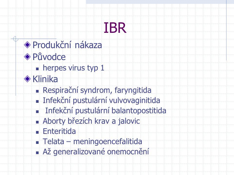IBR Produkční nákaza Původce herpes virus typ 1 Klinika Respirační syndrom, faryngitida Infekční pustulární vulvovaginitida Infekční pustulární balant