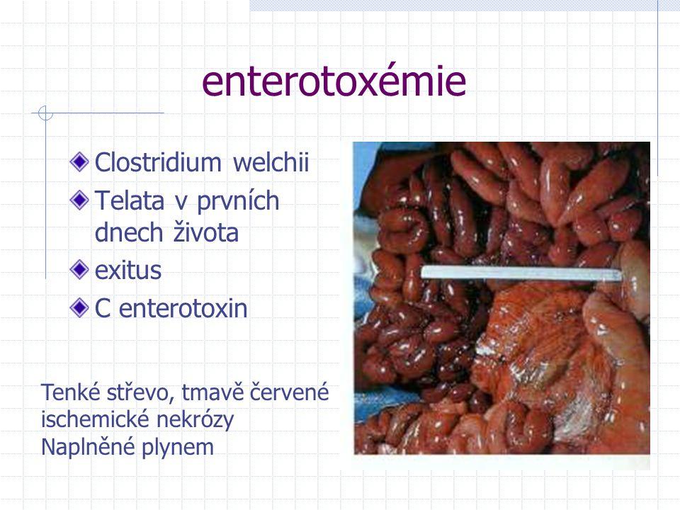enterotoxémie Clostridium welchii Telata v prvních dnech života exitus C enterotoxin Tenké střevo, tmavě červené ischemické nekrózy Naplněné plynem