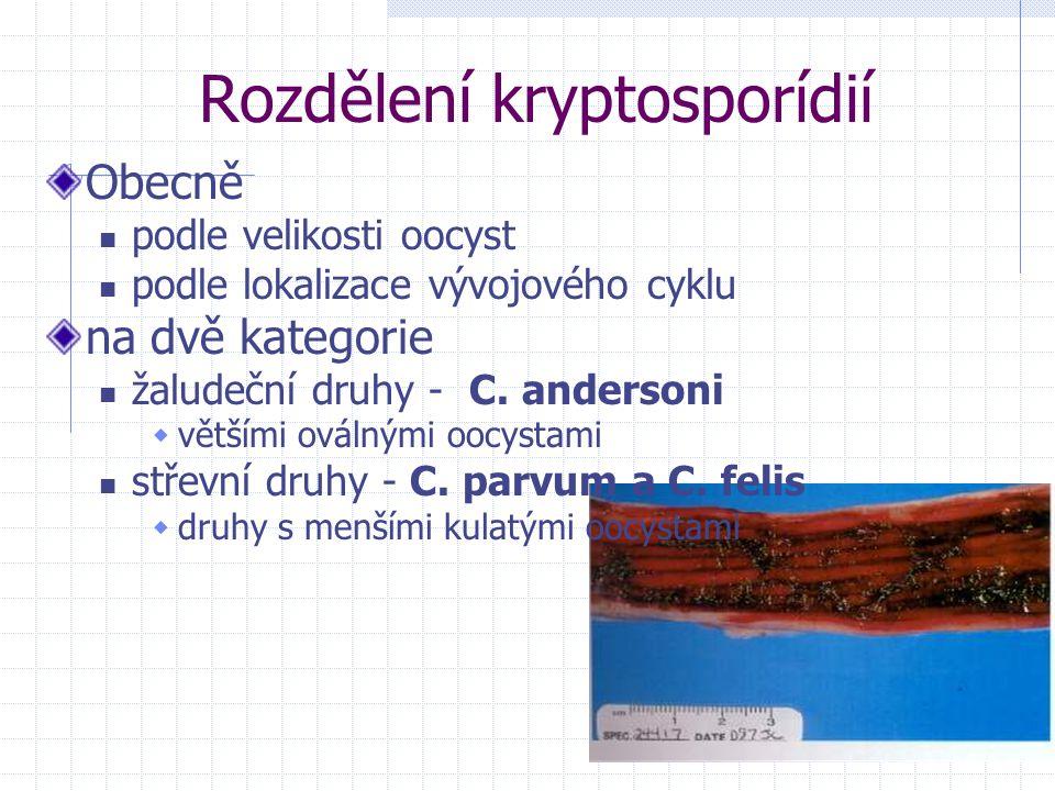 Rozdělení kryptosporídií Obecně podle velikosti oocyst podle lokalizace vývojového cyklu na dvě kategorie žaludeční druhy - C. andersoni  většími ová