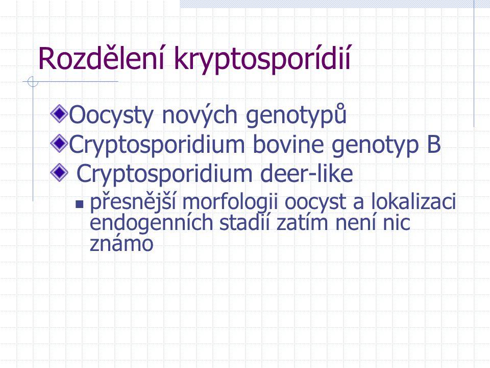 Rozdělení kryptosporídií Oocysty nových genotypů Cryptosporidium bovine genotyp B Cryptosporidium deer-like přesnější morfologii oocyst a lokalizaci e