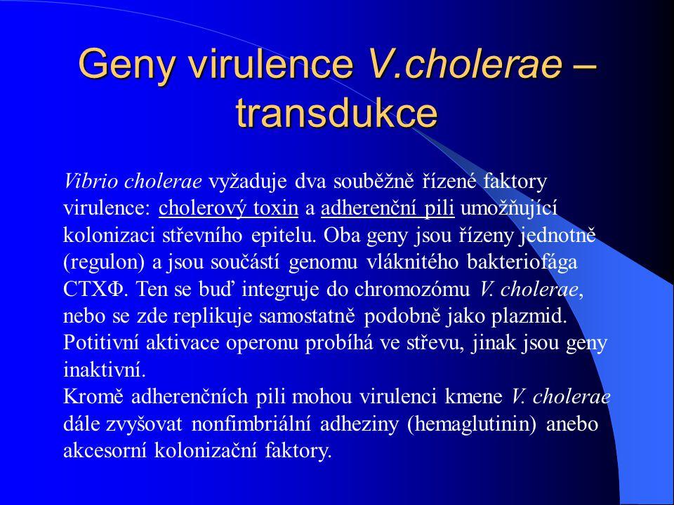 Geny virulence V.cholerae – transdukce Vibrio cholerae vyžaduje dva souběžně řízené faktory virulence: cholerový toxin a adherenční pili umožňující ko