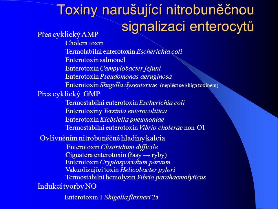 Toxiny narušující nitrobuněčnou signalizaci enterocytů Přes cyklický AMP Cholera toxin Termolabilní enterotoxin Escherichia coli Enterotoxin salmonel