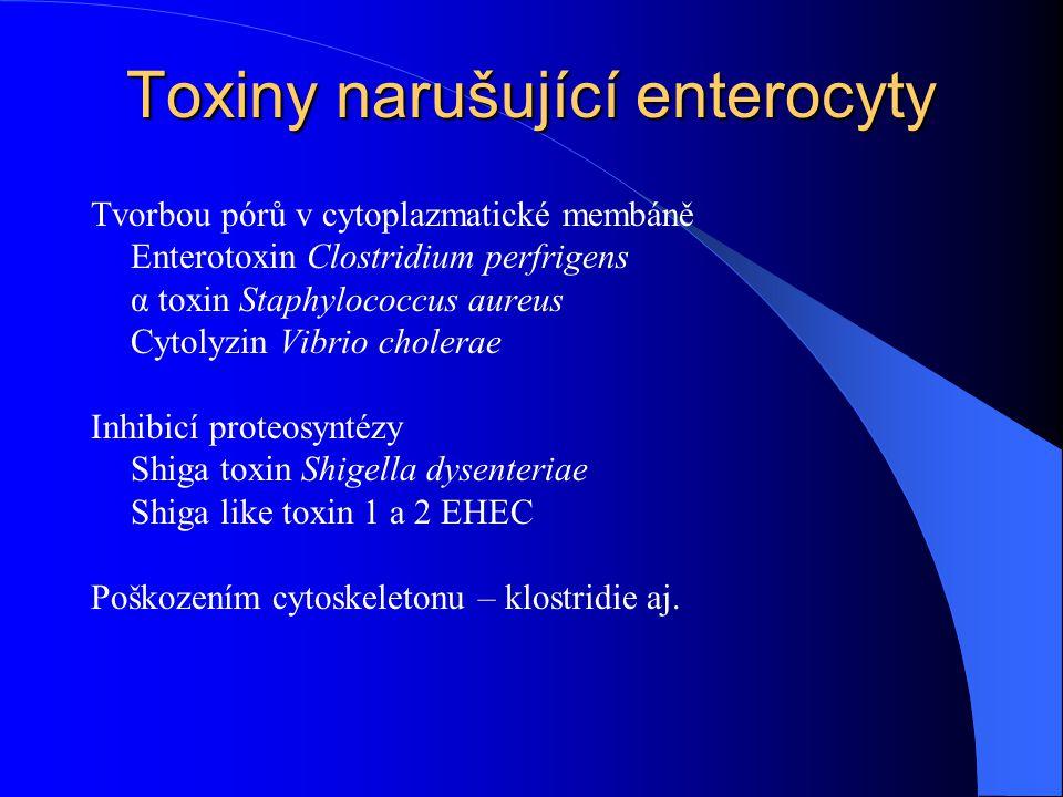 Toxiny narušující enterocyty Tvorbou pórů v cytoplazmatické membáně Enterotoxin Clostridium perfrigens α toxin Staphylococcus aureus Cytolyzin Vibrio