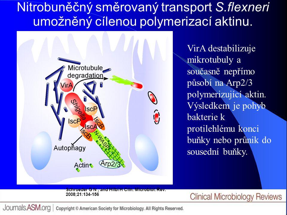 Nitrobuněčný směrovaný transport S.flexneri umožněný cílenou polymerizací aktinu. Schroeder G N, and Hilbi H Clin. Microbiol. Rev. 2008;21:134-156 Vir