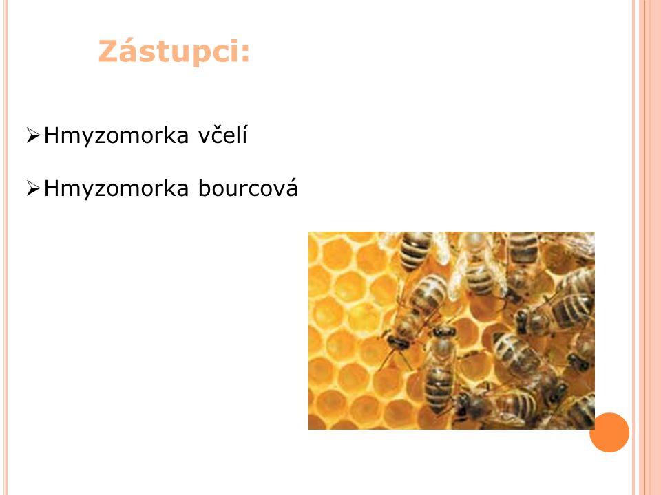 Zástupci:  Hmyzomorka včelí  Hmyzomorka bourcová