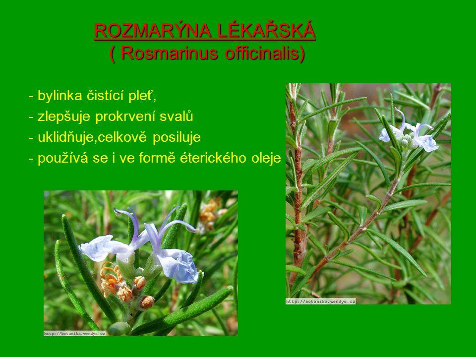 ROZMARÝNA LÉKAŘSKÁ ( Rosmarinus officinalis) - bylinka čistící pleť, - zlepšuje prokrvení svalů - uklidňuje,celkově posiluje - používá se i ve formě éterického oleje