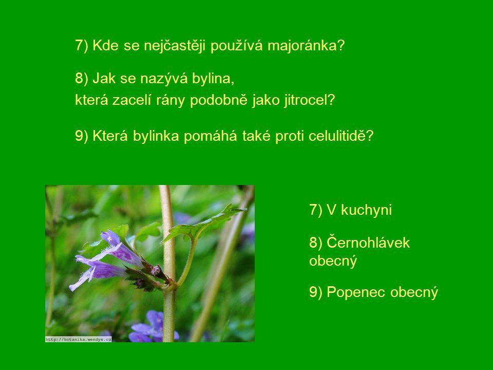 7) Kde se nejčastěji používá majoránka?8) Jak se nazývá bylina, která zacelí rány podobně jako jitrocel? 9) Která bylinka pomáhá také proti celulitidě