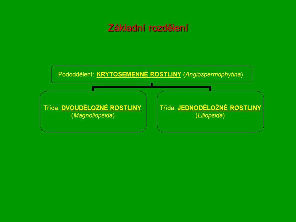 Základní rozdělení Pododdělení: KRYTOSEMENNÉ ROSTLINY (Angiospermophytina) Třída: DVOUDĚLOŽNÉ ROSTLINY (Magnoliopsida) Třída: JEDNODĚLOŽNÉ ROSTLINY (Liliopsida)