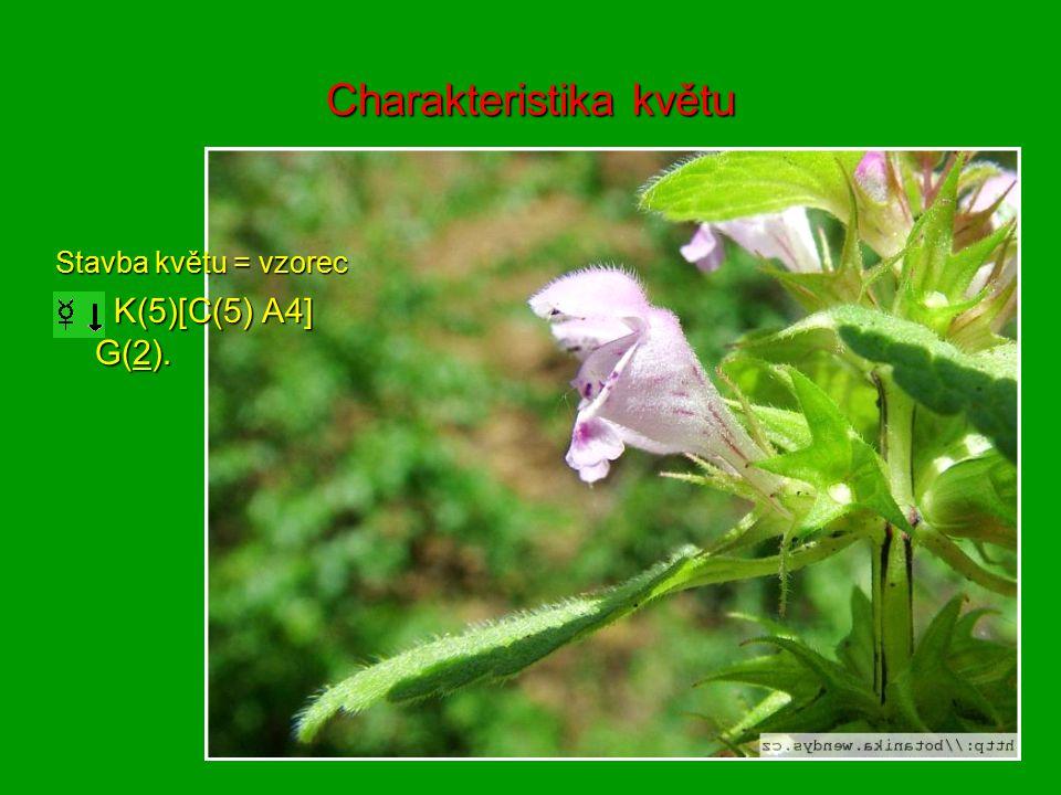 Charakteristika květu Stavba květu = vzorec K(5)[C(5) A4] G(2). K(5)[C(5) A4] G(2).