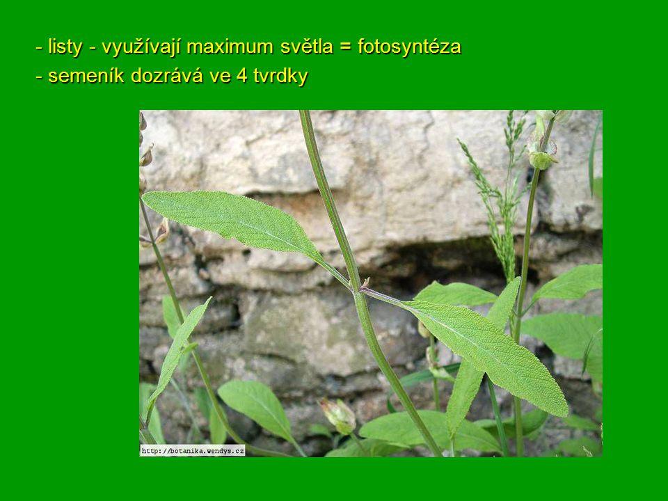 - listy - využívají maximum světla = fotosyntéza - semeník dozrává ve 4 tvrdky