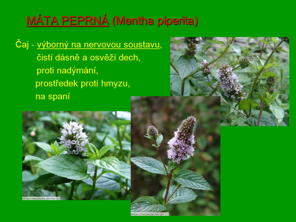 Čerpala jsem z těchto zdrojů: www stránkywww.botanika.wendys.czwww stránky -www.botanika.wendys.cz (obr.