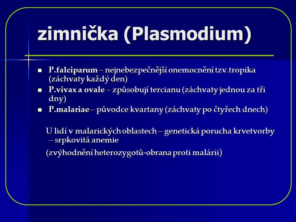 zimnička (Plasmodium) P.falciparum – nejnebezpečnější onemocnění tzv.tropika (záchvaty každý den) P.falciparum – nejnebezpečnější onemocnění tzv.tropi