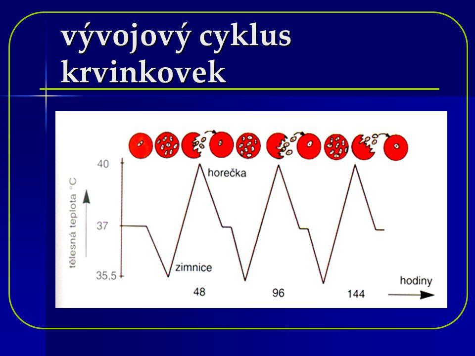 vývojový cyklus krvinkovek