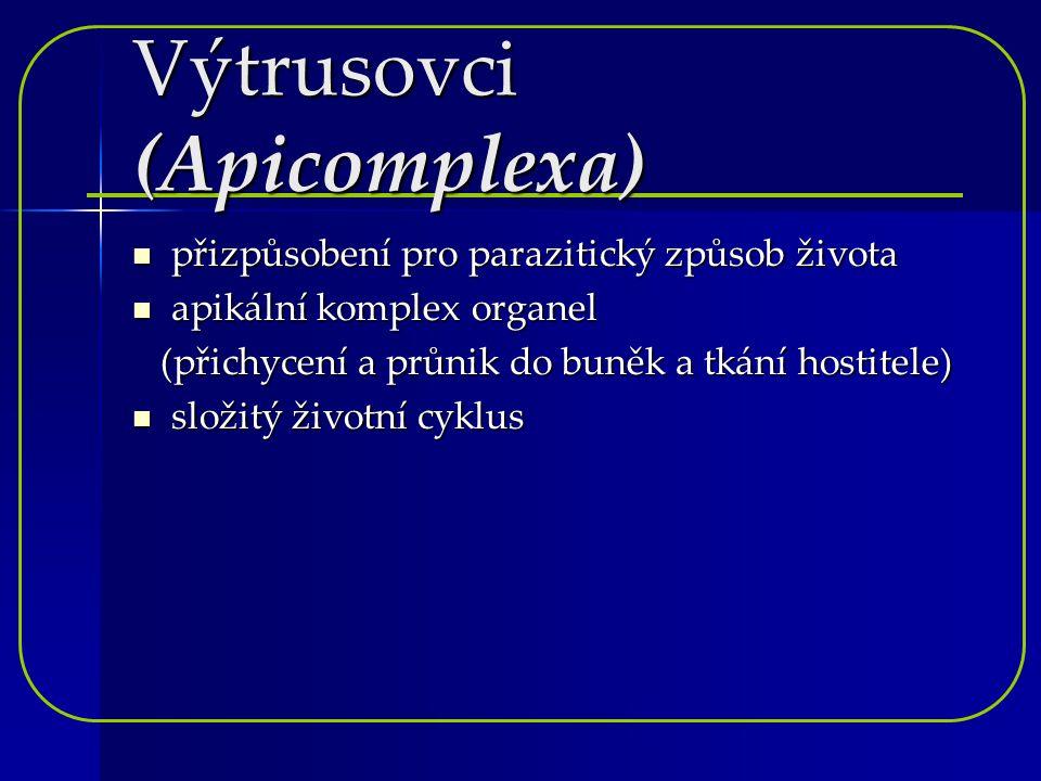 Výtrusovci (Apicomplexa) přizpůsobení pro parazitický způsob života apikální komplex organel (přichycení a průnik do buněk a tkání hostitele) složitý