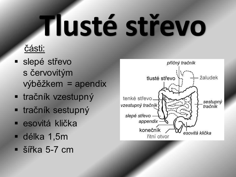 části:  slepé střevo s červovitým výběžkem = apendix  tračník vzestupný  tračník sestupný  esovitá klička  délka 1,5m  šířka 5-7 cm