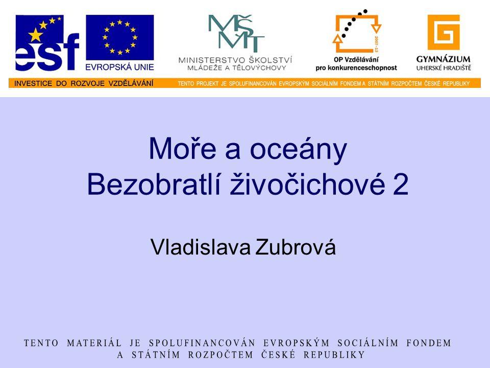 Moře a oceány Bezobratlí živočichové 2 Vladislava Zubrová