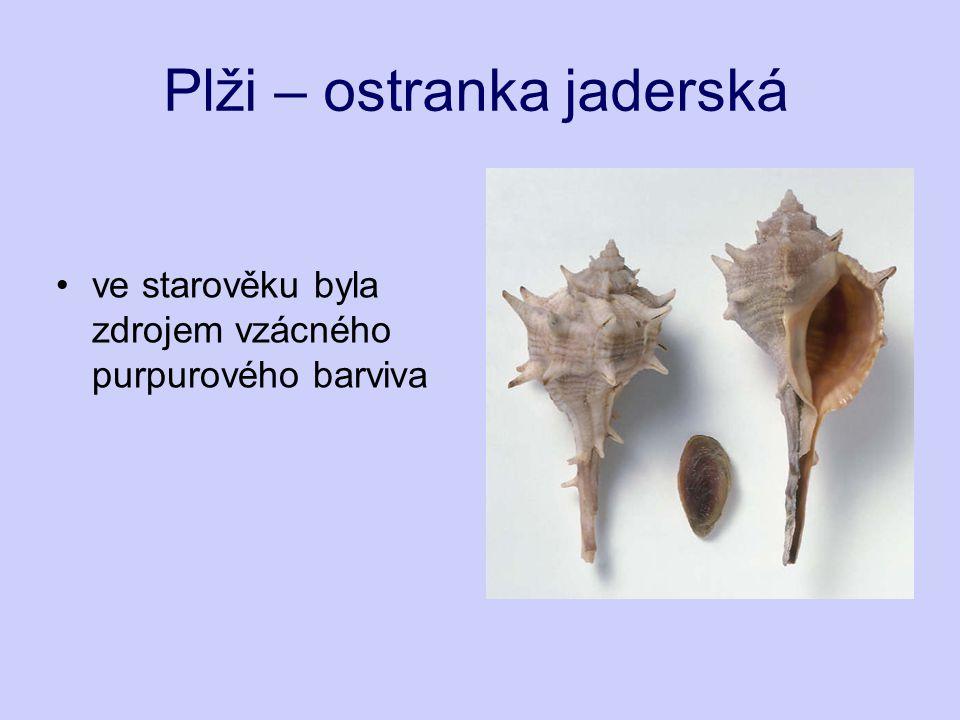 Plži – ostranka jaderská ve starověku byla zdrojem vzácného purpurového barviva