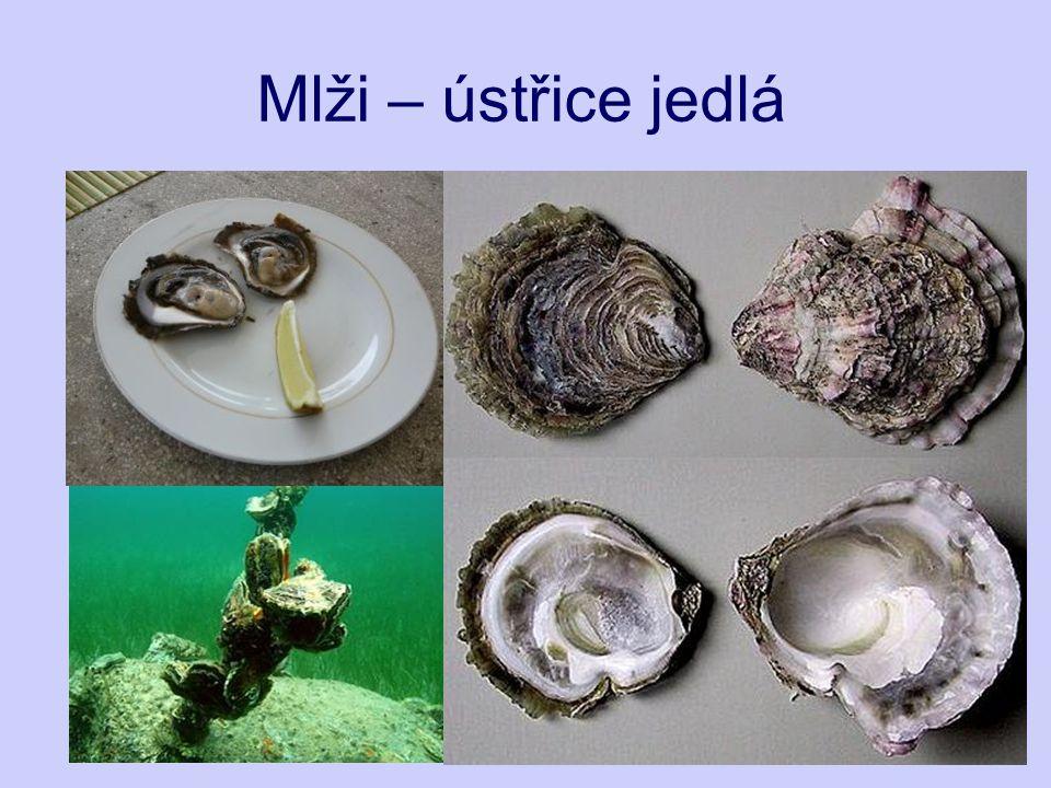 Zdroje: http://zooola.webgarden.cz/ http://www.nexuspearls.co.uk/ http://img5.rajce.idnes.cz/ http://skorka.bloguje.cz/ http://elrinconmarinos-nogasteropodos.iespana.es/ http://www.ryby-speciality.sk/ http://klub.snakesub.cz/ http://oceangrow.septentriones.com/ http://avrils-place.com/ http://www.zemesveta.cz/ http://www.coneshell.net/ http://www.dkimages.com/ http://cs.wikipedia.org/ http://www.21stoleti.cz/ Kvasničková, D.