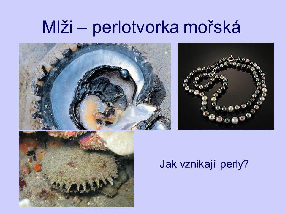 Mlži – perlotvorka mořská Jak vznikají perly?