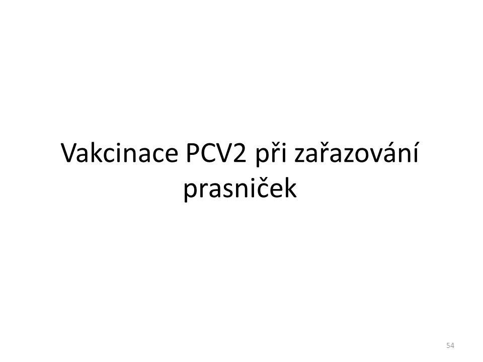 Vakcinace PCV2 při zařazování prasniček 54