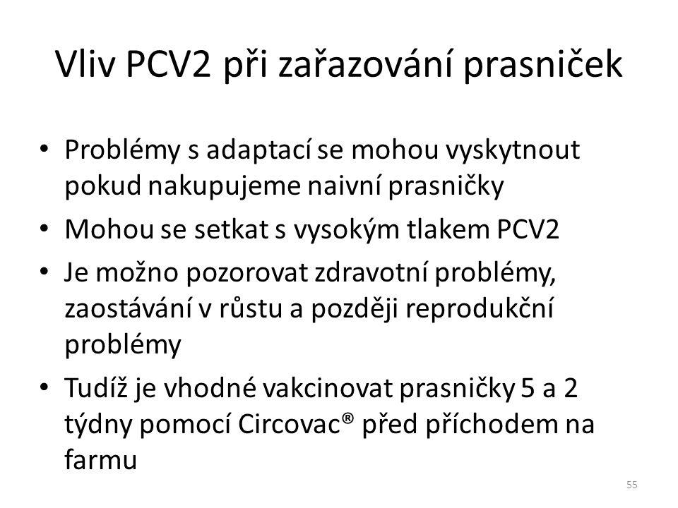 Vliv PCV2 při zařazování prasniček Problémy s adaptací se mohou vyskytnout pokud nakupujeme naivní prasničky Mohou se setkat s vysokým tlakem PCV2 Je