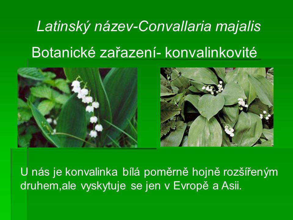 Latinský název-Convallaria majalis Botanické zařazení- konvalinkovité U nás je konvalinka bílá poměrně hojně rozšířeným druhem,ale vyskytuje se jen v