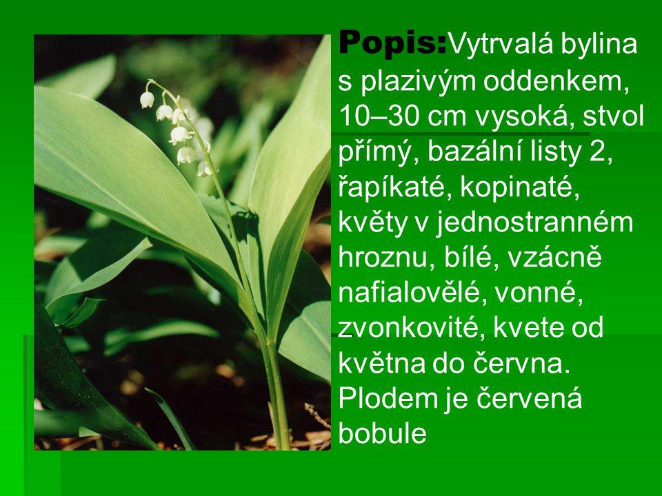 Popis: Vytrvalá bylina s plazivým oddenkem, 10–30 cm vysoká, stvol přímý, bazální listy 2, řapíkaté, kopinaté, květy v jednostranném hroznu, bílé, vzá