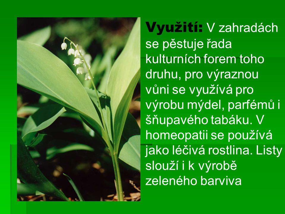 Využití: V zahradách se pěstuje řada kulturních forem toho druhu, pro výraznou vůni se využívá pro výrobu mýdel, parfémů i šňupavého tabáku. V homeopa