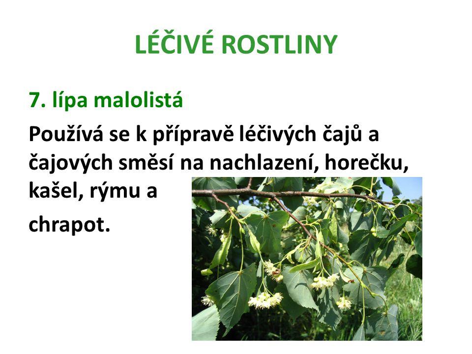 LÉČIVÉ ROSTLINY 7. lípa malolistá Používá se k přípravě léčivých čajů a čajových směsí na nachlazení, horečku, kašel, rýmu a chrapot.