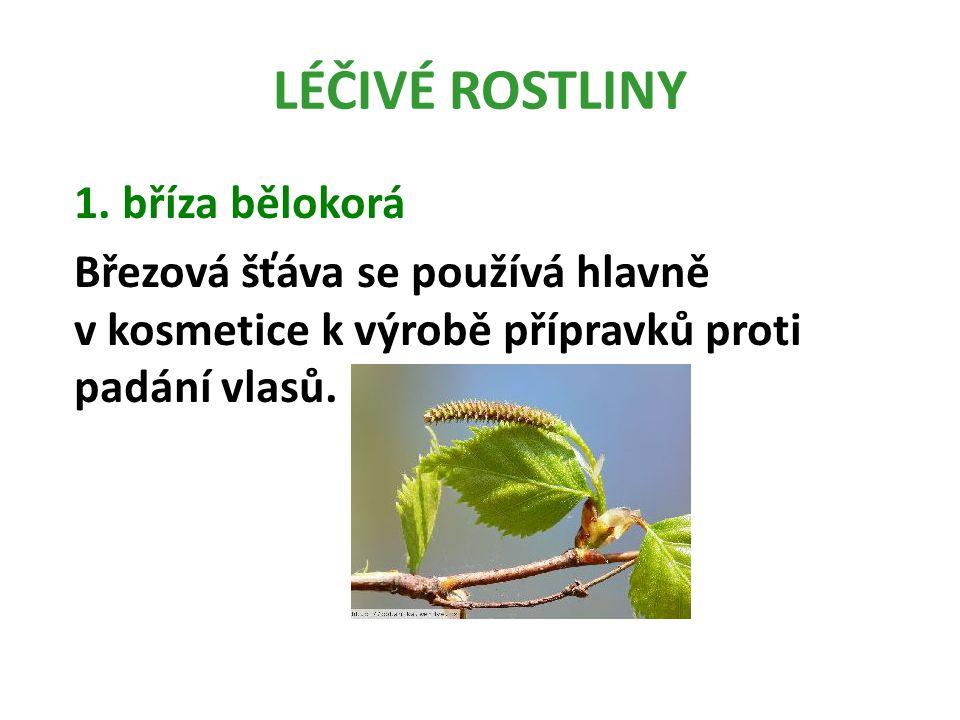 LÉČIVÉ ROSTLINY 4.