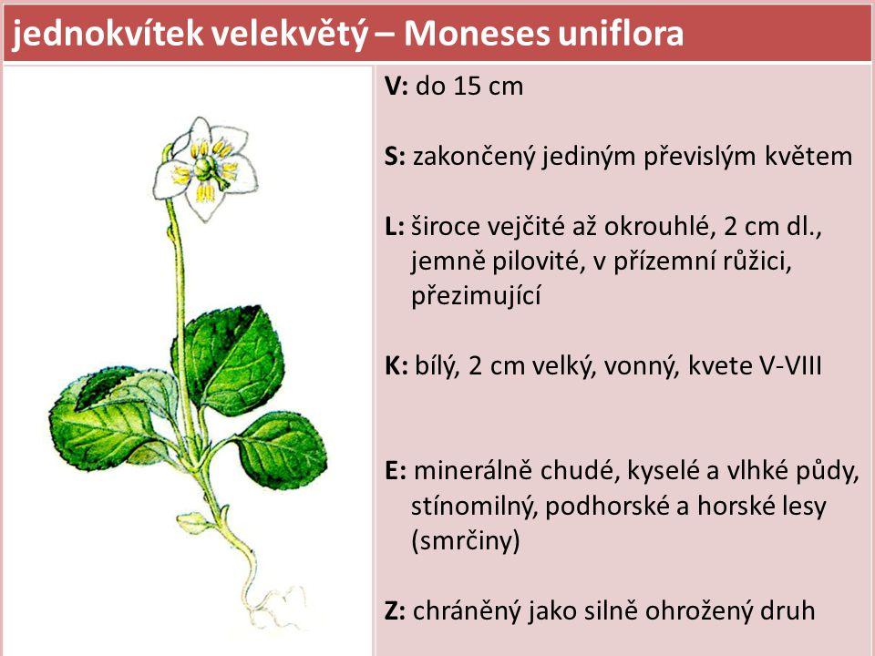 jednokvítek velekvětý – Moneses uniflora V: do 15 cm S: zakončený jediným převislým květem L: široce vejčité až okrouhlé, 2 cm dl., jemně pilovité, v přízemní růžici, přezimující K: bílý, 2 cm velký, vonný, kvete V-VIII E: minerálně chudé, kyselé a vlhké půdy, stínomilný, podhorské a horské lesy (smrčiny) Z: chráněný jako silně ohrožený druh