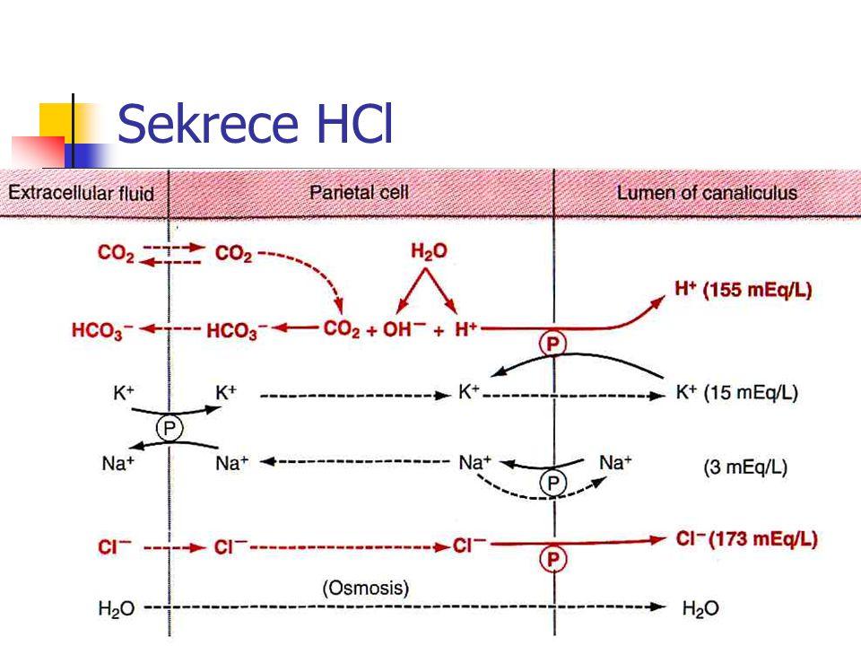 Sekrece HCl