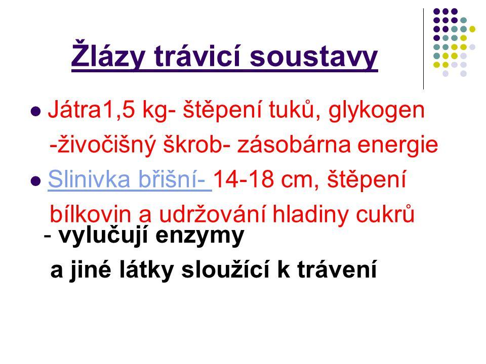Žlázy trávicí soustavy Játra1,5 kg- štěpení tuků, glykogen -živočišný škrob- zásobárna energie Slinivka břišní- 14-18 cm, štěpení Slinivka břišní- bíl