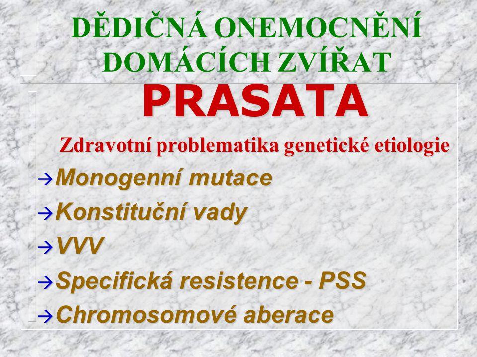 DĚDIČNÁ ONEMOCNĚNÍ DOMÁCÍCH ZVÍŘATPRASATA Zdravotní problematika genetické etiologie à Monogenní mutace à Konstituční vady à VVV à Specifická resisten