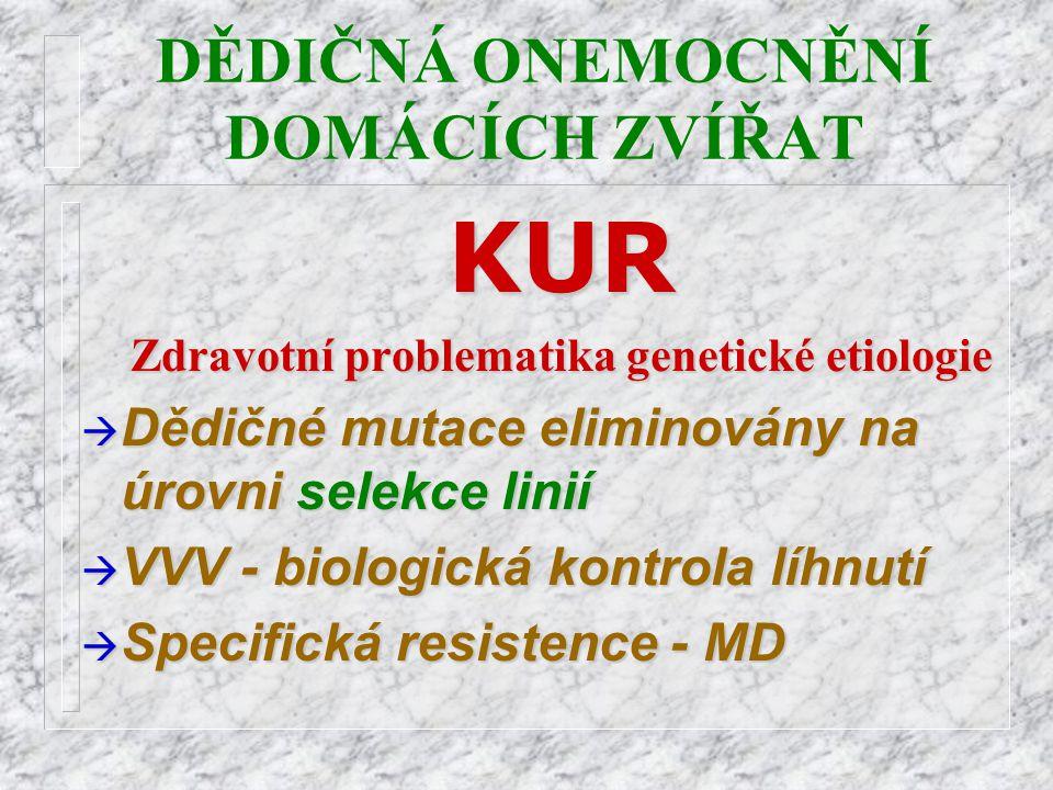 DĚDIČNÁ ONEMOCNĚNÍ DOMÁCÍCH ZVÍŘATKUR Zdravotní problematika genetické etiologie à Dědičné mutace eliminovány na úrovni selekce linií à VVV - biologic