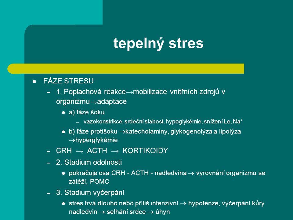 tepelný stres FÁZE STRESU – 1.