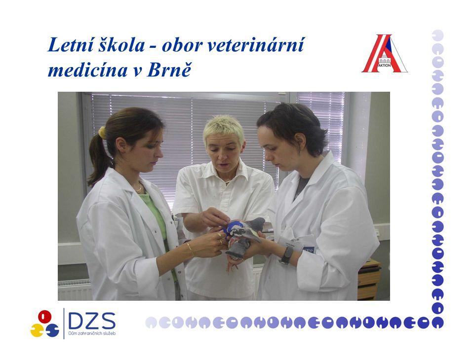 Letní škola - obor veterinární medicína v Brně
