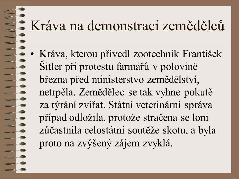 Kráva, kterou přivedl zootechnik František Šitler při protestu farmářů v polovině března před ministerstvo zemědělství, netrpěla. Zemědělec se tak vyh