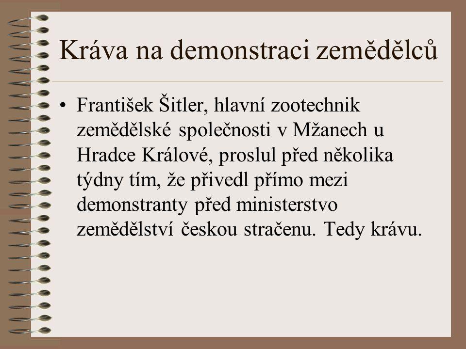 Kráva na demonstraci zemědělců František Šitler, hlavní zootechnik zemědělské společnosti v Mžanech u Hradce Králové, proslul před několika týdny tím,