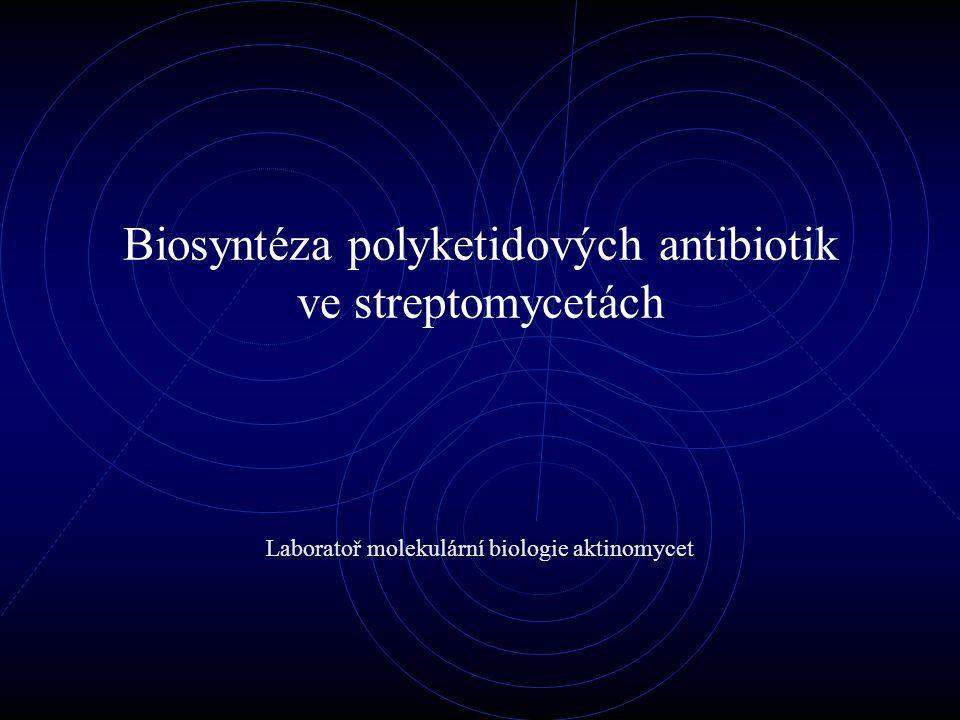 Biosyntéza polyketidových antibiotik ve streptomycetách Laboratoř molekulární biologie aktinomycet