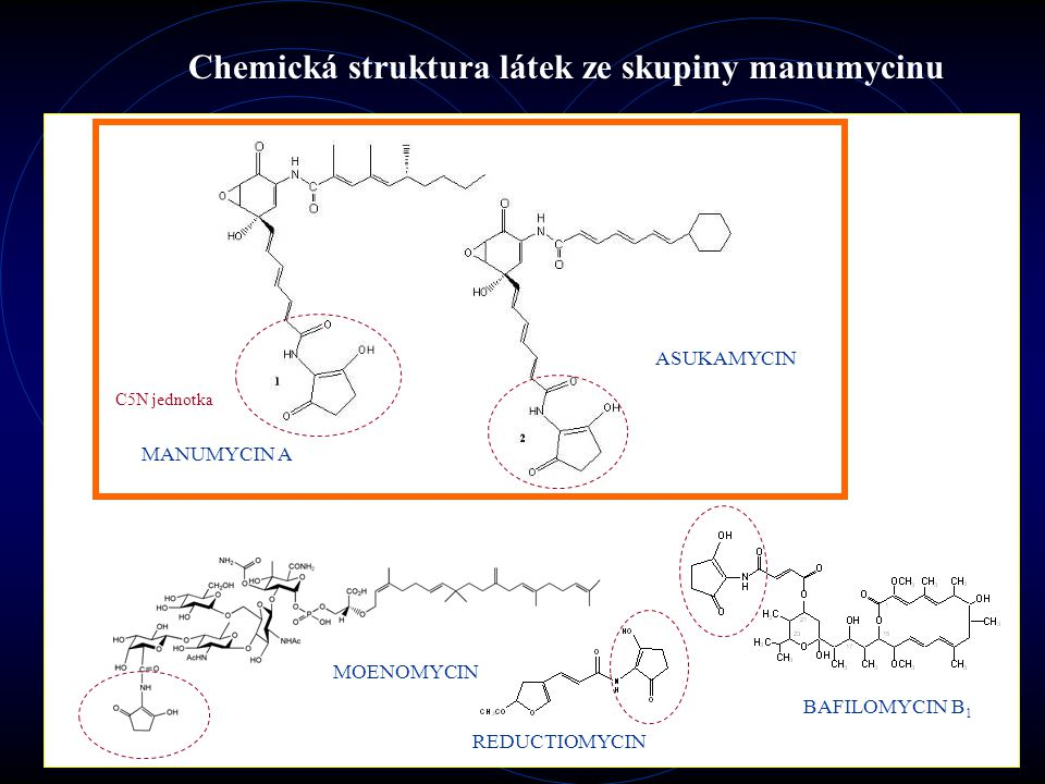 Biologické aktivity metabolitů ze skupiny manumycinu MANUMYCINY A, E, F, G; ASUKAMYCIN, COLABOMYCIN Antibakteriální (zejména proti G + ) Protizánětlivá Anti-apoptotická Kancerostatická Další (insekticidní, kokcidiostatické, antifungální apod.) Další látky obsahující C 5 N jednotku MOENOMYCIN A Antibakteriální (zejména proti G + ), alternativa  -laktamů ve veterinární medicíně REDUCTIOMYCIN Antibakteriální, antifungální a protivirová (New Castle disease virus) BAFILOMYCIN B 1 Specifický vakuolární ATPasový inhibitor, inhibitor vesikulárního transportu kaspázy-1 neutrální sfingomyelinázy I  B kinázy Ras farnesyltransferázy acetylcholin esterázy mechanismem enzymové inhibice