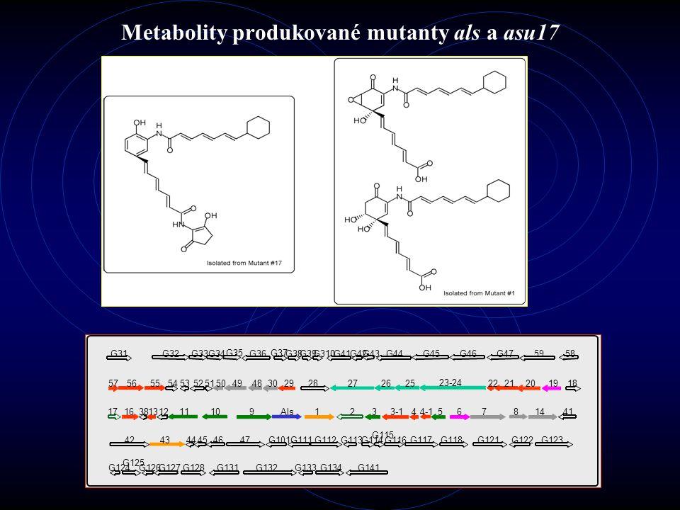 Biosyntetický model asukamycinu Řetězce jso syntetizovány PKS-II Epoxidace probíhá mechanismem monooxygenázy C 5 N vzniká pravděpodobně spolupůsobením ALAS a CoA-ligázy Gen asu5 kóduje aldolázu, podílející se na tvorbě mC 7 N Gen asu23-24 se podílí na biosyntéze cyklohexylového zbytku – startovací jednotky horního řetězce
